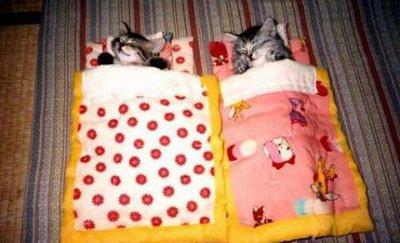 بچه گربه های باحال